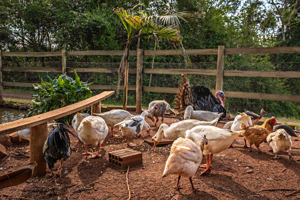 Animais da fazenda | Cachoeira 3 Quedas