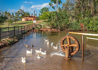 Animais da Fazenda da Cachoeira 3 Quedas